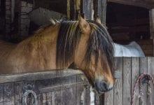 ajutati calul sa doarma mai bine