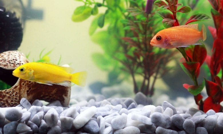 calitatea apei din acvariu