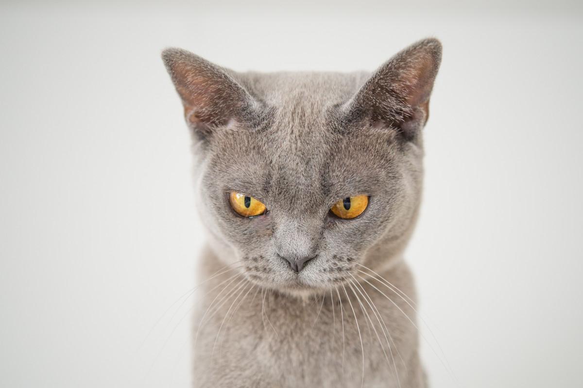 comportamente negative ale pisicii