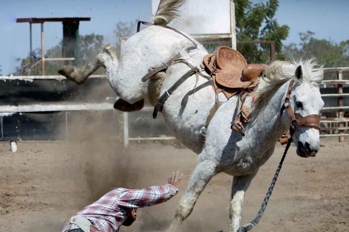 De ce lovesc caii cu picioarele