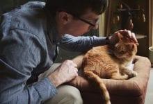 semne durere la pisici