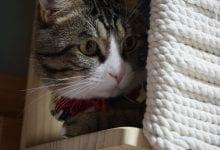 stresul si anxietatea la pisici