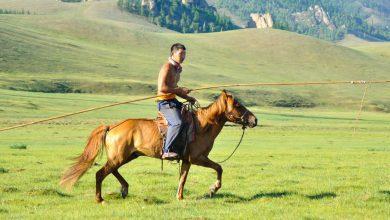 Calul mongol chinez